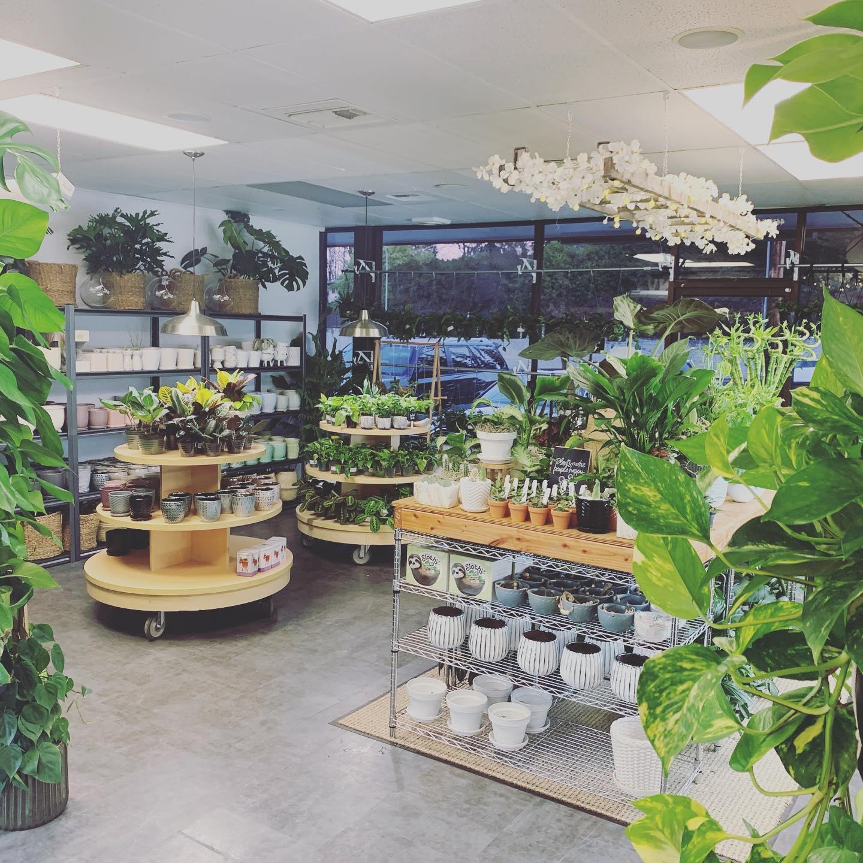 Plant Envy