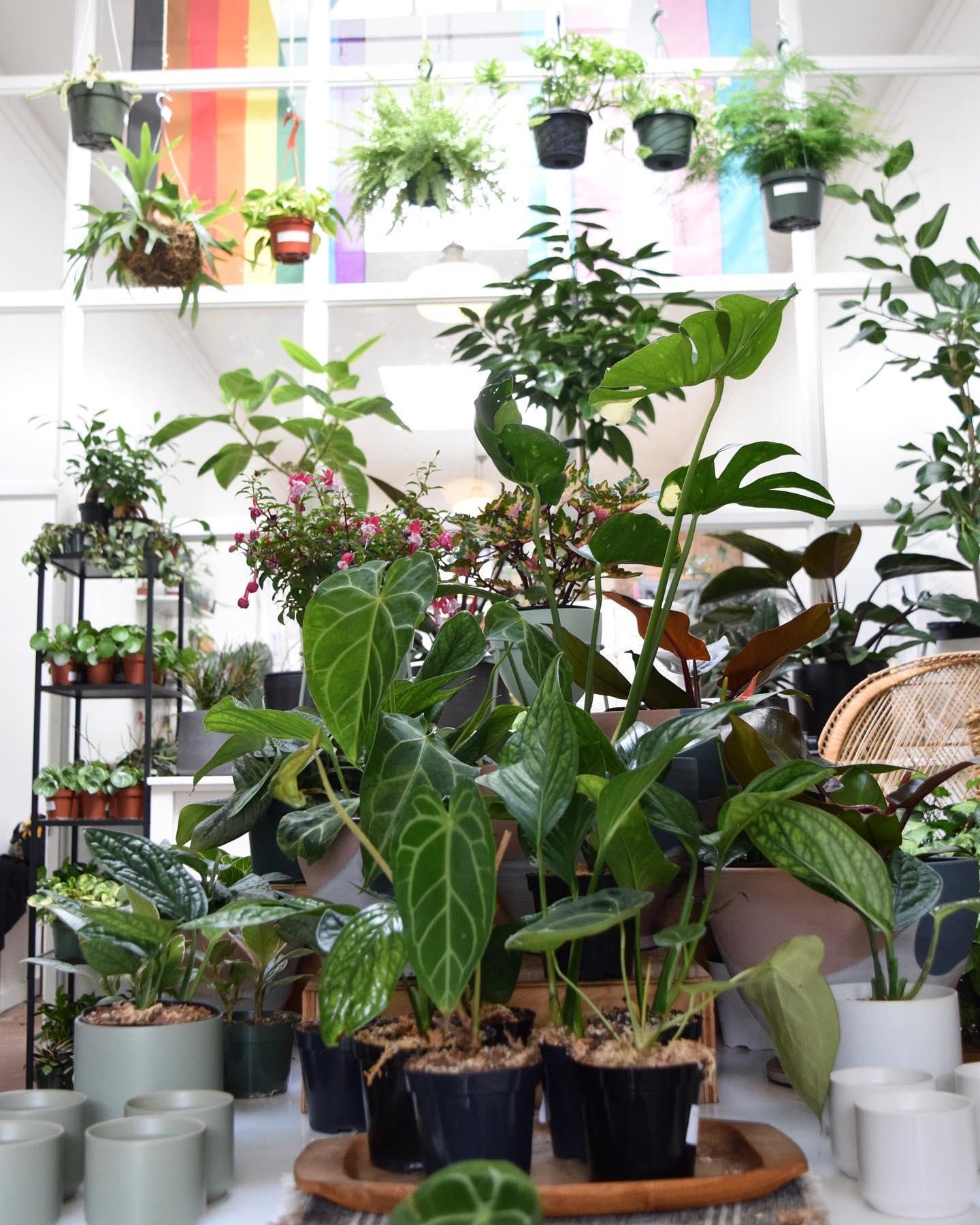 The Plant Fairies
